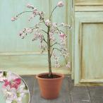 花鉢 桃鉢 「しだれ源平桃」 ピンク系 日比谷花壇