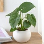 お手入れかんたん ミニ観葉植物  ギフト プレゼント 贈り物