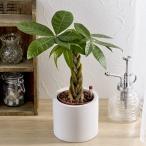 お手入れかんたん観葉植物「編込みパキラ(シリンダーホワイト)」  日比谷花壇
