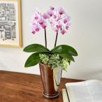 日比谷花壇 ミディ胡蝶蘭観葉寄せ2本立ち ランラン