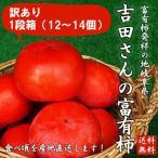 岐阜県産訳あり「吉田さんの富有柿1段箱L〜2Lサイズ 12〜14個」(送料無料)