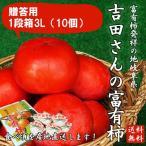 岐阜県産 贈答用「吉田さんの富有柿1段箱3Lサイズ 10個」(送料無料)