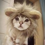 たてがみ 耳付き 猫 犬 服 ライオン ドッグウェア 帽子 ウィッグ ペット S/M/L 小型犬  あったかアイテム DM便 送料無料 pw-06