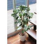 光触媒 人工観葉植物 アルデシア 高さ90cm 光の楽園 フェイクグリーン