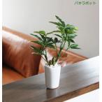 光の楽園の人工観葉植物
