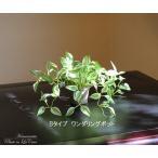 人工観葉植物 ワンダリングポット