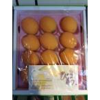 フルーツひろは 茂木びわ 12玉〜15玉(500g)化粧箱入長崎びわ