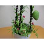 不思議な植物 ディスキディア・ぺクチノイデス4号 鉢カバー付き