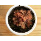 食虫植物 ドロセラ tokaiensis 鉢カバー付き