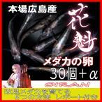 広島産 煌メダカの卵 30個+α ラメ きらめき 改良めだかの最高峰 体外光 柿色 キラメキ