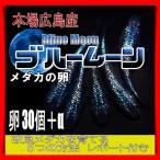 広島産 オロチ めだか 卵30個 メダカ 最高級 改良 極黒 ブラック 最高