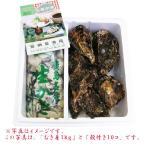送料無料 網登海産さんの 広島生牡蠣むき身500g と 殻付き牡蠣10コ のセット オイスターナイフ&手袋付き