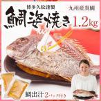 【博多久松謹製】鯛姿焼き 1.2kg(鯛出汁2パック付き)焼き鯛 祝い鯛