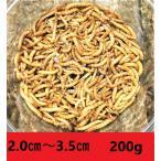 ミルワーム 3 00匹 送料無料 2cm〜3.5cmサイズ(レターパックプラス)