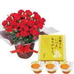 母の日 ギフト 贈り物 送料無料 赤カーネーション鉢植えとまるごとみかんゼリーのセット / 2020 鉢花 鉢植え カーネーション スイーツ 花とセット 花