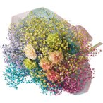 母の日 花 花束 送料無料 カスミソウ カラフル虹色ブーケ / 母の日ギフト 2021 スワッグ 切り花 ブーケギフト ドライフラワー 生花 花 メッセージカード【21m】
