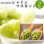 2021年ご予約承り中 9月出荷開始 ギフト フルーツ ブドウ 送料無料 山梨・長野県産 シャインマスカット 約1.2kg(2房入) / ぶどう 果物 青果 旬
