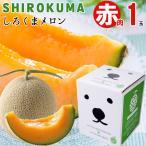 2021年ご予約承り中 7月出荷開始 メロン 送料無料 SHIROKUMA SWEET 北海道産赤肉メロン 1玉入(約1.6kg 大玉 Lサイズ) / 産地直送 寄付 支援