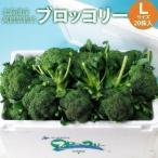 ブロッコリー Lサイズ 20株 北海道産