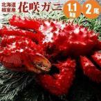花蟹 - 花咲蟹 1.1kg × 2尾 希少な 花咲蟹 根室