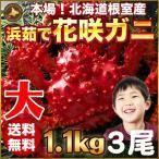 花蟹 - 花咲蟹 1.1kg × 3尾 希少な 花咲蟹 根室