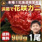 花蟹 - 花咲ガニ 900g × 1尾 希少な 花咲ガニ 北海道産 カニ