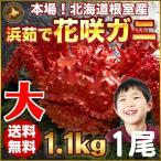 花蟹 - 花咲蟹 1.1kg × 1尾 希少な 花咲蟹 北海道産 蟹