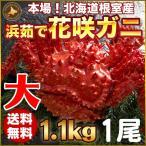 人気のカニ「花咲ガニ」ほっけ一夜干し1尾付。北海道の蟹の中でも最も個性的な花咲ガニ。花咲ガニは北海道...