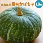 北海道 栗味かぼちゃ 1玉1.3kg以上 栗のような味の カボチャ
