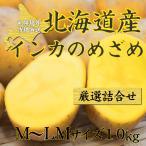 インカのめざめ 10kg 新 じゃがいも 送料無料 / ジャガイモ インカ 馬鈴薯 じゃがいも 北海道 札幌中央卸売市場 インカの目覚め