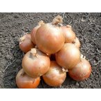 低農薬で安心 北海道三笠産たまねぎ(Lサイズ・5kg)