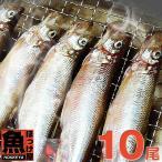 柳葉魚 - 北海道(広尾産)ししゃも オスメス 込み 10尾 【本ししゃも】