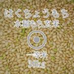令和元年産 はくちょうもち 30kg 玄米 一等米 北海道米 糯米 もち米