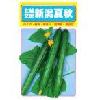 野菜の種 キュウリ 新潟夏秋 1.8ml