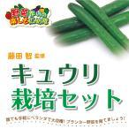 藤田智先生監修 キュウリ用 栽培セット 苗はついておりません