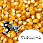 ポップコーン豆5kg【マッシュルーム種】