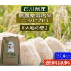 無農薬栽培米 こしひかり白米 30kg お米  自然農法  令和2年産  「大地の恵」