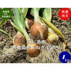 EM自然農法 無農薬 【訳あり】新玉ねぎ 1kg