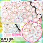 【在庫限り】 花咲く色紙 桜 (寄せ書き 色紙) アルタ