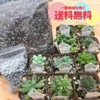 Yahoo!ハニーミント☆送料無料☆【当店農場生産】とってもかわいい多肉植物&セダムの苗10鉢+多肉植物&セダム用の土5L+肥料のお試しセット