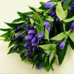 りんどう リンドウ 竜胆 5本 切花 生花 切り花 造花ではありません お色おまかせ