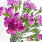スプレーカーネーション Sカーネ 5本 切花 生花 切り花 造花ではありません お色おまかせ