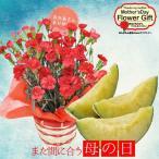 母の日 カーネーション グルメ ギフト 送料無料 / 3色から選べる カーネーション 鉢植えと マスクメロン セット プレゼント用ギフトボックス入り