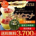 送料無料 高知産 すいか ルナピエナ 温室立体栽培の西瓜です