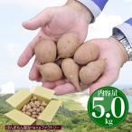 送料無料 鹿児島 県 種子島 産 濃厚な味わいの 安納芋 訳あり 極小サイズ 5kg