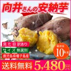 さつまいも 安納芋  送料無料 訳あり 鹿児島 種子島産 無選別 10kg 焼き芋や干し芋にも