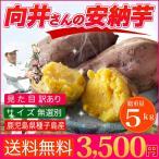 さつまいも 安納芋 送料無料 訳あり 鹿児島 種子島産 無選別 5kg 焼き芋や干し芋に