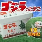 北海道すいか|ゴジラのたまご 1玉(7.5kg以上)出荷予定時期:7月10日〜7月末|代引き不可