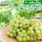 山形県産 ぶどう ナイアガラ 2kg 秀品 ブドウ 葡萄 ナイヤガラ