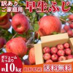 山形県産 りんご 訳あり 早生ふじ 10キロ ご家庭用 産地直送 林檎 リンゴ 10kg